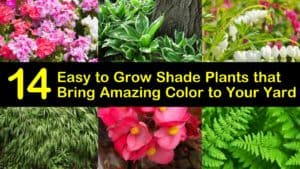 Easy to Grow Shade Plants titleimg1