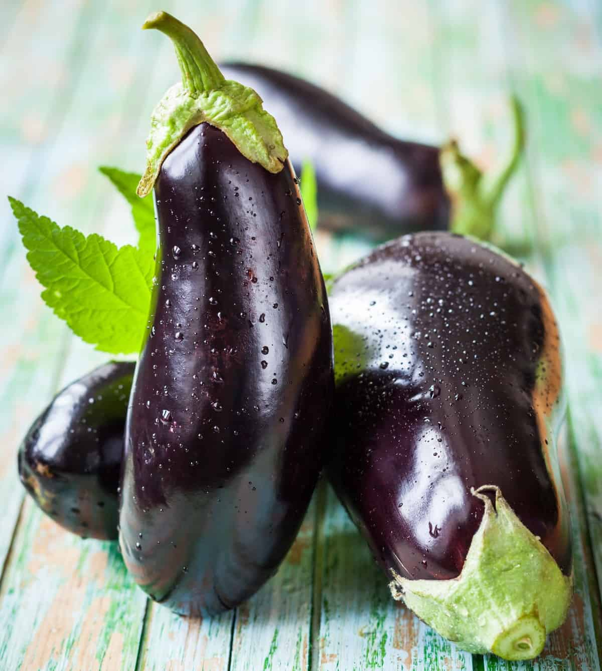 eggplant has very specific heat and light requirements