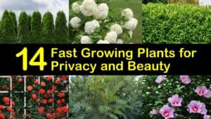 Fast Growing Plants for Privacy titleimg1