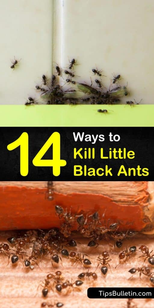 With an ant problem, you need to eliminate their food source. Once you do, seal up any entry points and bait the crevices around your baseboards, windowsills, and doorways. This ensures the workers take the ant bait back to the rest of the ant colony. #getridofblackants #ants #blackants