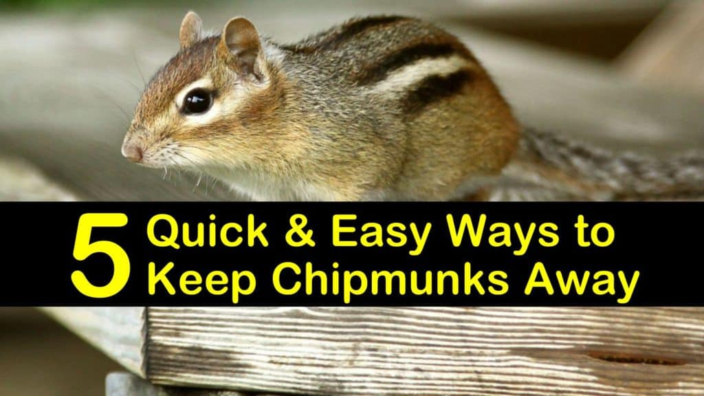 How to Keep Chipmunks Away titleimg1