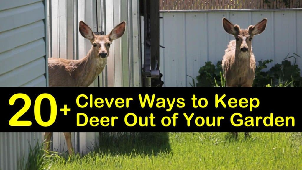 How to Keep Deer Out of Your Garden titleimg1