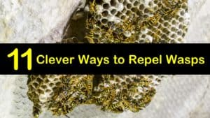 How to Repel Wasps titleimg1