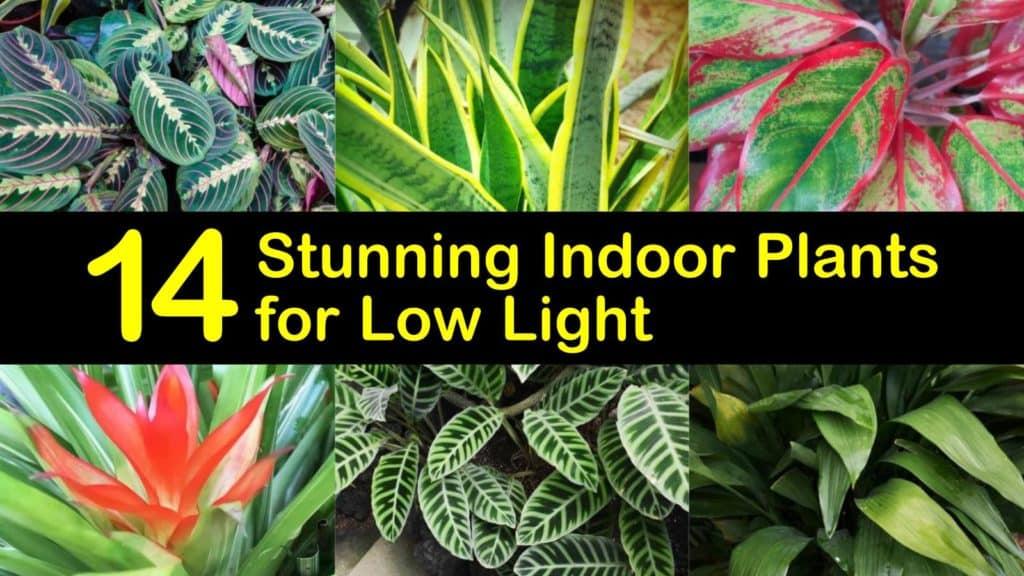Indoor Plants for Low Light titleimg1