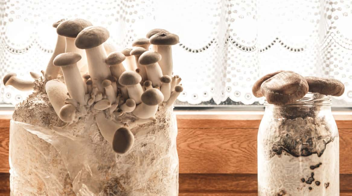 mushrooms are plants that require no soil to grow