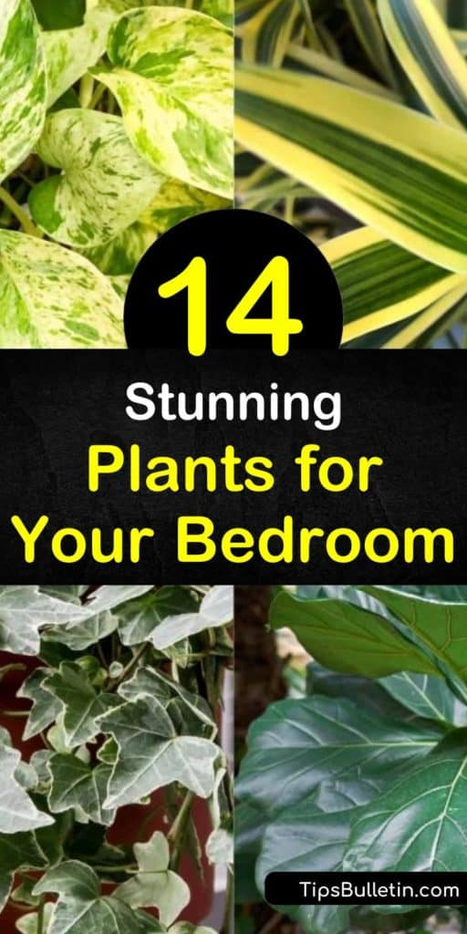Discover how to get a better night's sleep, remove carbon dioxide, and improve the air quality of your room with bedroom plants. Create a tranquil space in your bedroom with peace lily, aloe vera, English ivy, and pothos plants. #bedroomplants #plants #bedroom #plantsforbettersleep