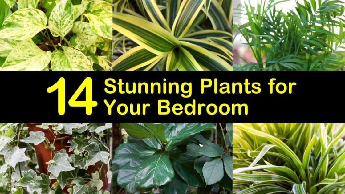 14 Stunning Plants for Your Bedroom