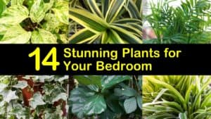 Plants for Your Bedroom titleimg1