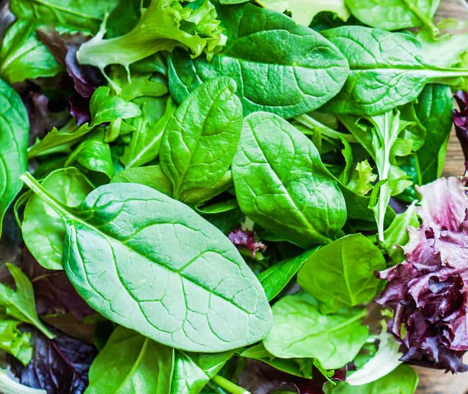 salad greens are fast-growing plants that need moist soil
