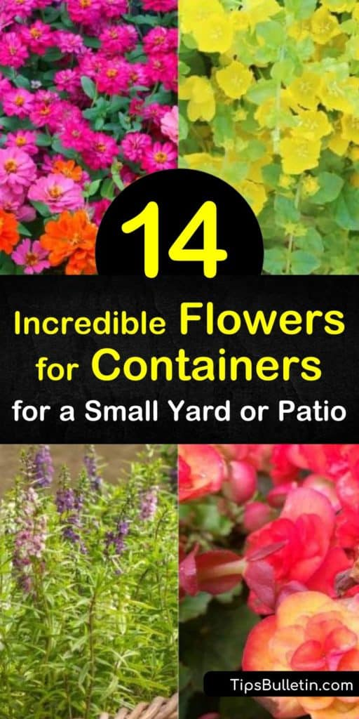 Fill your garden space or patio with containers of plants that are easy to grow and lush with blossoms. Grow impatiens, zinnias, and verbena in hanging baskets or plant geraniums, marigolds, and angelonia in a sunny window box. #flowersforcontainers #flowersincontainers #containerflowers