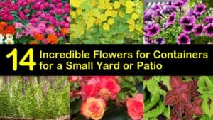 Best Flowers for Containers titleimg1