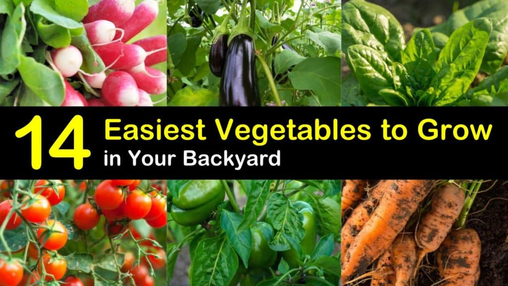 Easiest Vegetables to Grow titleimg1