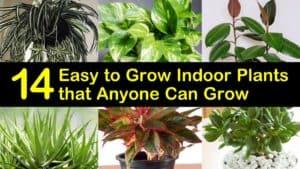 Easy to Grow Indoor Plants titleimg1