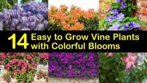 Easy to Grow Vine Plants titleimg1