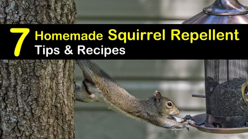 Homemade Squirrel Repellent titleimg1