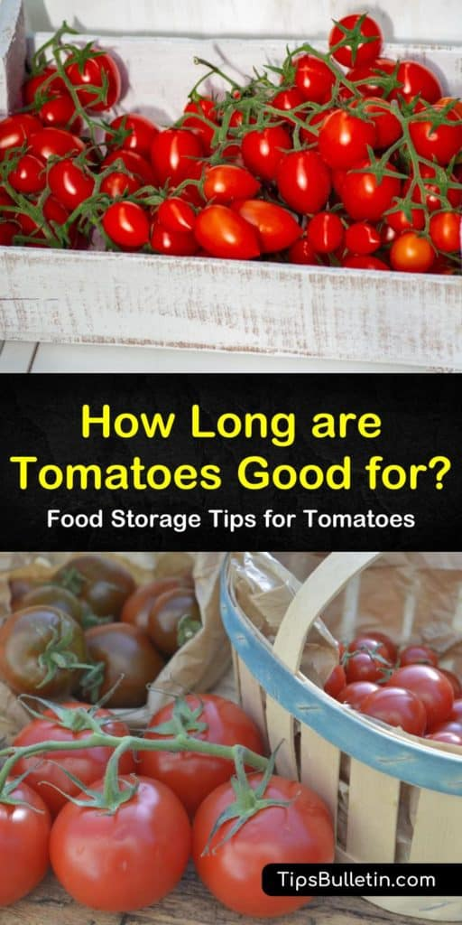 Discover just how long are tomatoes good for on the countertop. Learn how to store unripe tomatoes in a paper bag to increase longevity. Whether you plan to store tomatoes in the freezer or will refrigerate them, we explain the shelf life and procedures for each option. #tomatoes #good #ripe