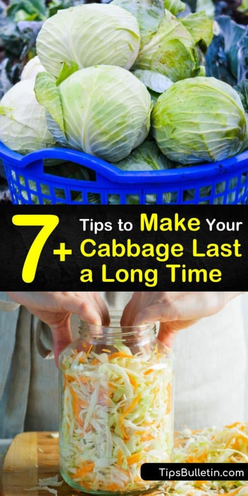 How long does cabbage last? Store green or red cabbage in the fridge for 2 weeks or freeze cabbage in an airtight container for 4 weeks. Cabbage leaves are packed full of vitamin C, and tasty prepared as coleslaw or pickled for long term storage. #cabbage #cabbagelast #preparingcabbage