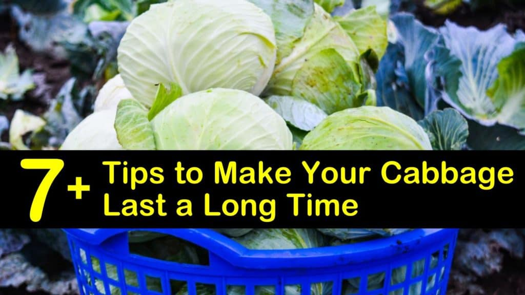 How Long Does Cabbage Last titleimg1