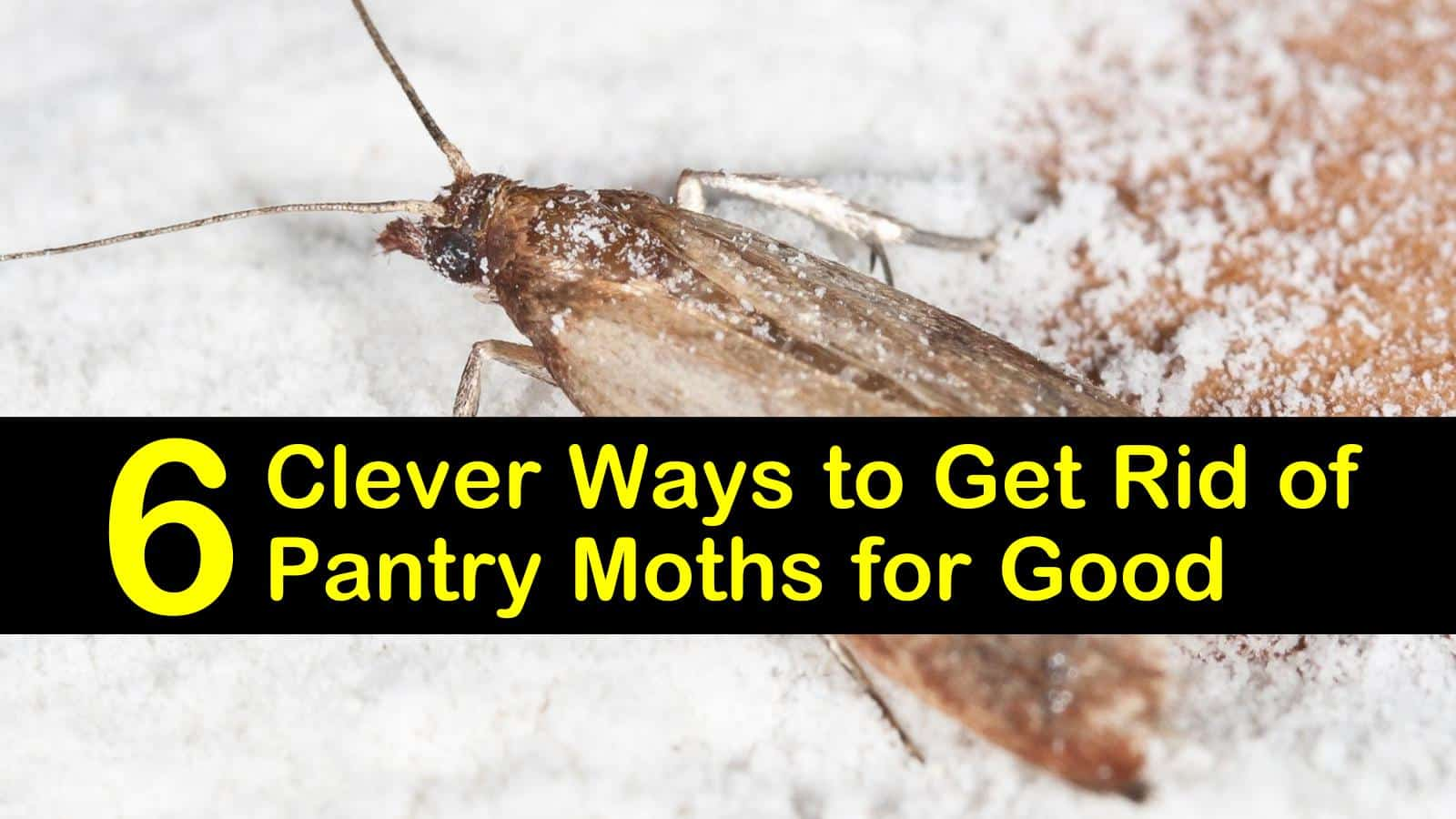 6 Clever Ways To Get Rid Of Pantry Moths For Good