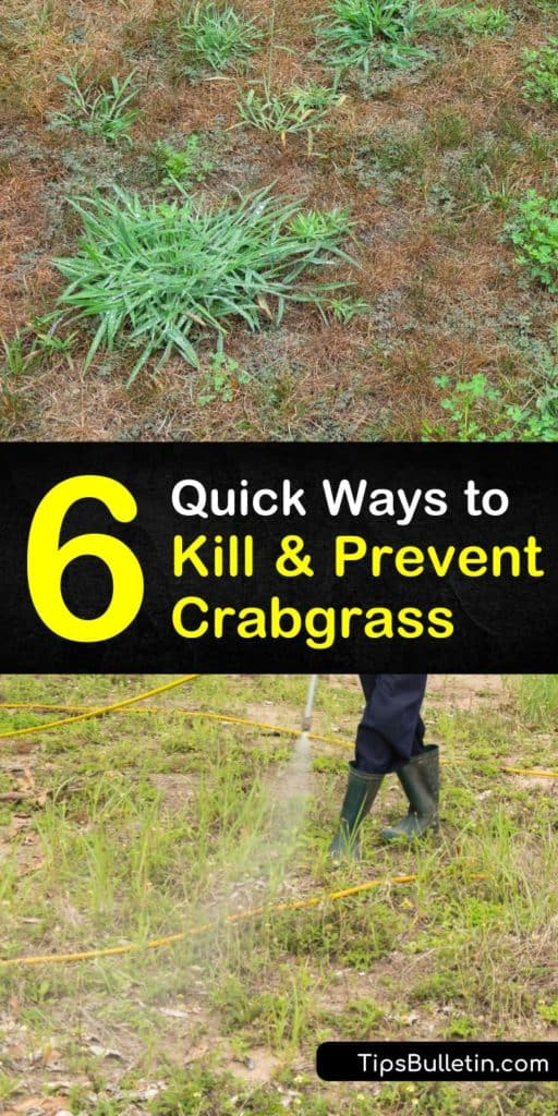 Discover simple methods for how to prevent crabgrass using various pre-emergent strategies. Try corn gluten and Dithiopyr to stop crabgrass seeds from germinating in early spring. Use lawn care tips like fertilizer and mowing to offset weeds with healthy grass growth. #prevent #crabgrass #weeds