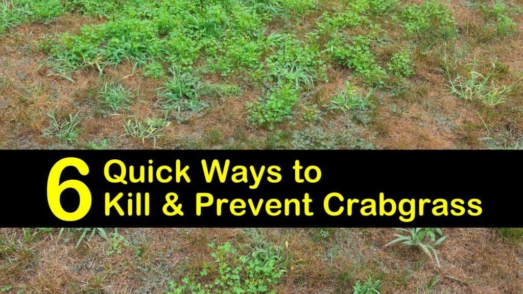 How to Prevent Crabgrass titleimg1