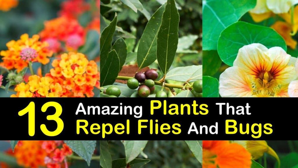 Plants that Repel Flies titleimg1
