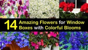 Amazing Flowers for Window Boxes titleimg1
