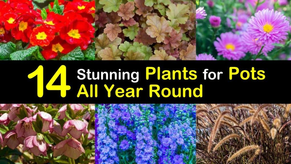 Amazing Plants for Pots All Year Round titleimg1