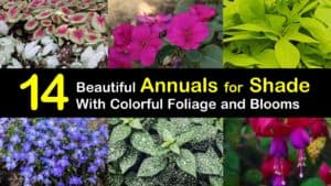 Annuals for Shade titleimg1