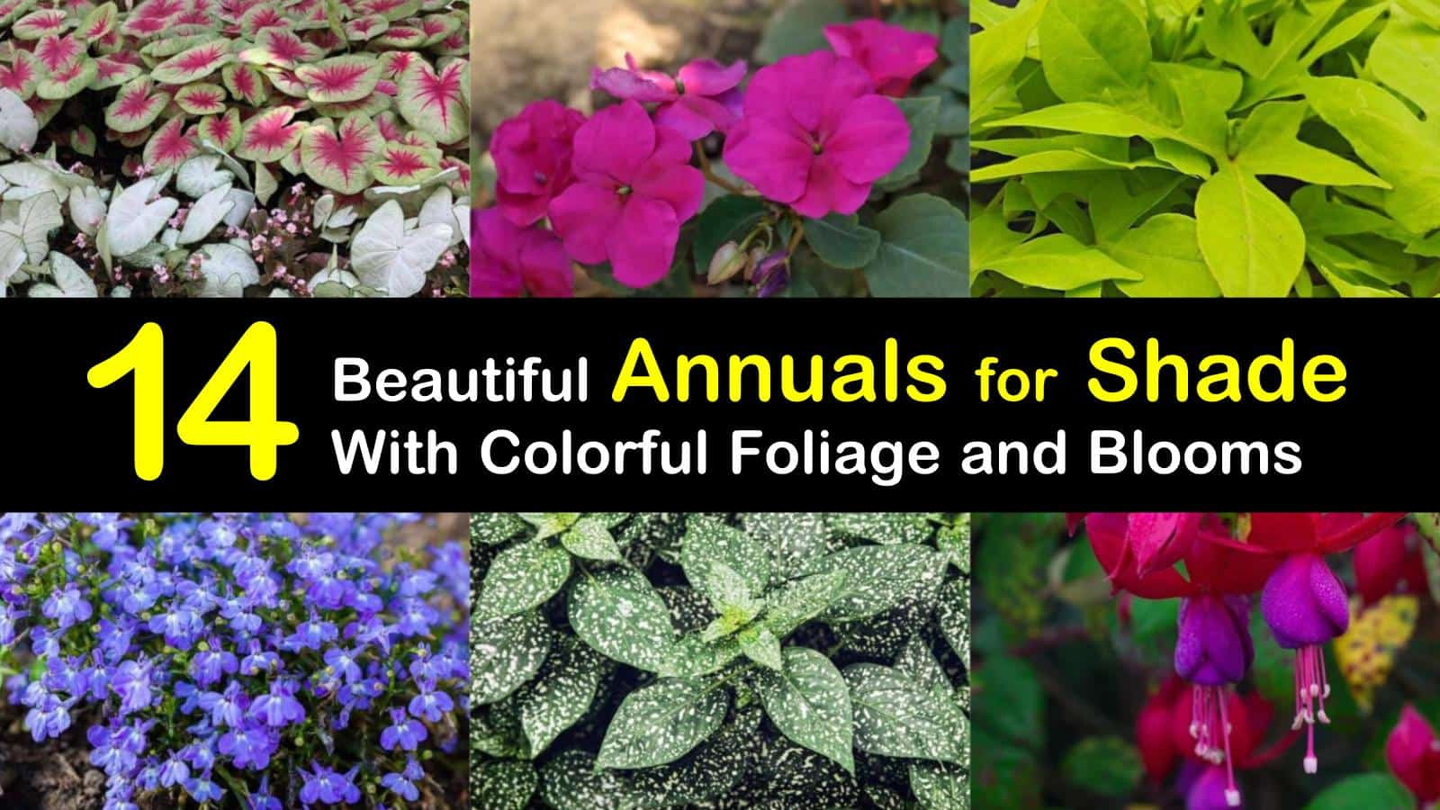 14 Beautiful Annuals For Shade With Colorful Foliage And Blooms