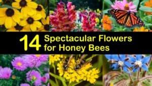 Best Flowers for Honey Bees titleimg1