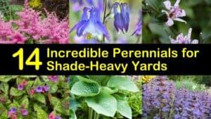 Best Perennials for Shade titleimg1