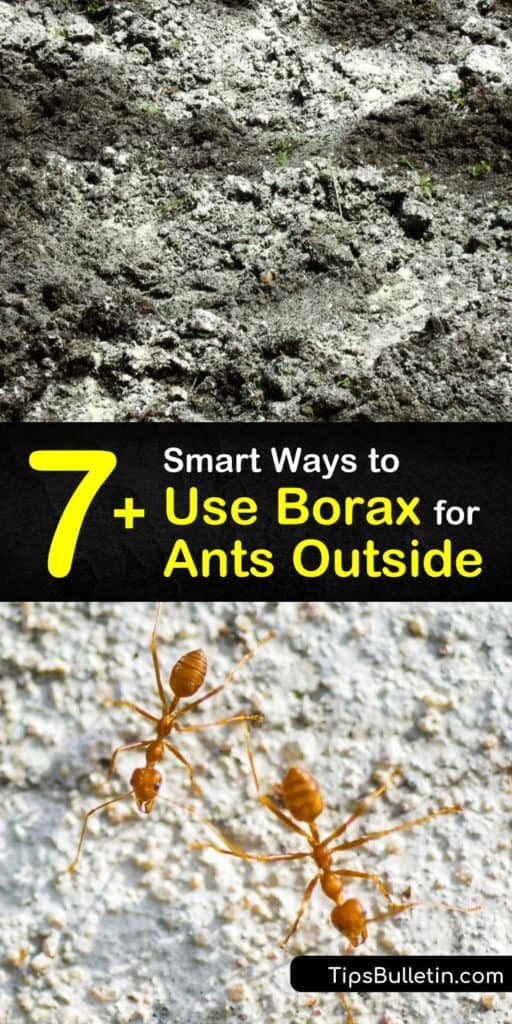 What can peanut butter and cotton balls do for your ant problem? Find out how to permanently kill ants and make homemade ant bait with this list of ways to use Borax for killing ants outside. #borax #killants #outside #ants