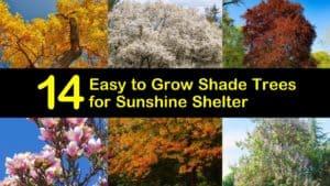 Easy to Grow Shade Trees titleimg1