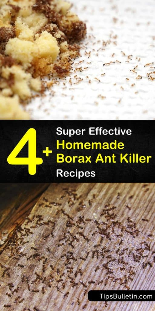 Try these home remedies to get rid of ants, whether your home has fire ants or carpenter ants. Our homemade Borax ant killer recipes truly kill ants. #boraxantkiller #borax #kill #ants