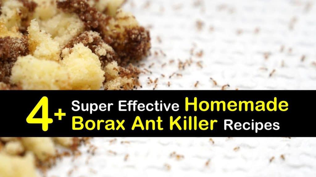 Homemade Borax Ant Killer titleimg1