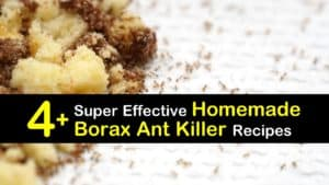 Homemade Borax Ant Killer titleimg1