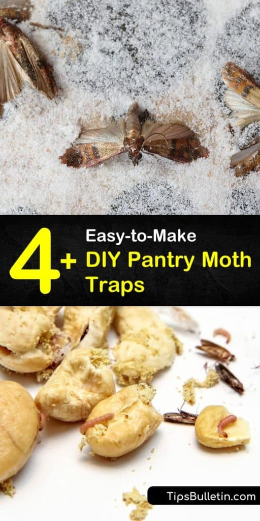Get rid of pantry moths by using a pheromone in pantry moth traps and cleaning out crevices. Learn about the relationship between your pantry shelves, Indian meal moths, and bay leaves to chase out a moth infestation. #killmoths #moth #mothtraps #naturalmothtrap #trap