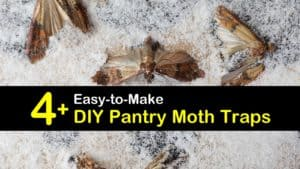 Homemade Pantry Moth Traps titleimg1