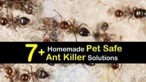 Homemade Pet Safe Ant Killer titleimg1