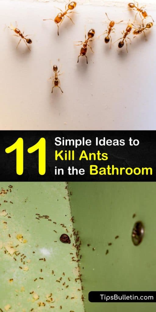 Find out how to get rid of ants in the bathroom using simple home remedies. Learn to fight an ant infestation by applying caulk to the crevices from which the ants emerged in the first place or by spraying a natural repellent like tea tree oil. #getridofants #antsinthebathroom #ants #bathroom