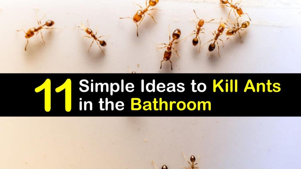 Kill Ants In The Bathroom, How To Get Rid Of Tiny Ants In Bathroom