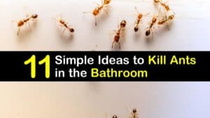 How to Get Rid of Ants in the Bathroom titleimg1