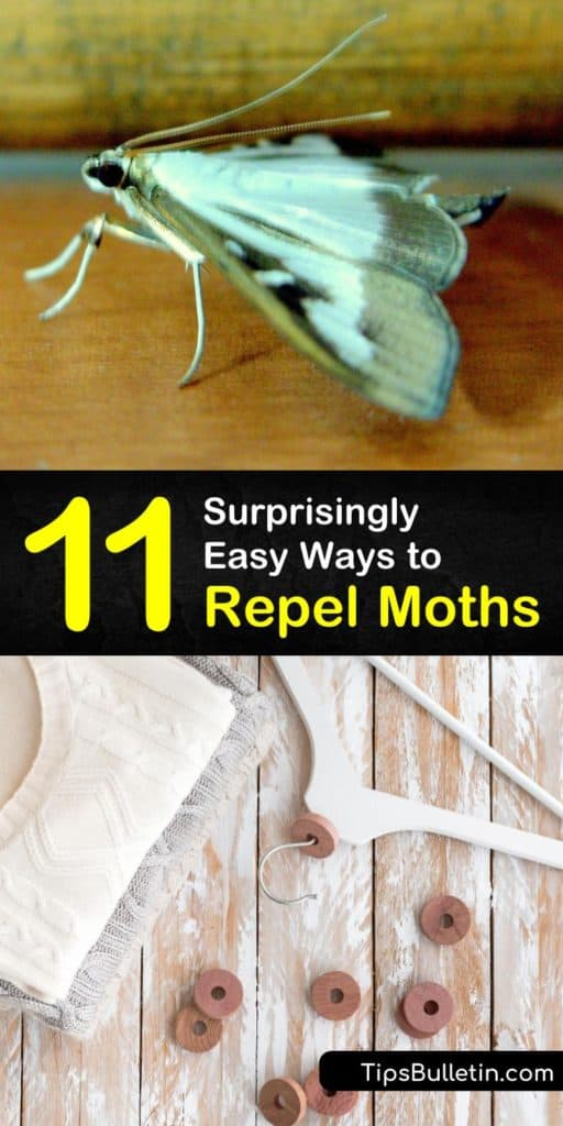 Find out how to keep adult moths and moth larvae away from your home without expensive pest control. These tips cover making sachets for hangers in your closets, pheromone sticky traps for storage, and airtight traps for your pantry. #moths #keepaway #moth #repelmoths