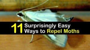 How to Keep Moths Away titleimg1