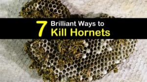 How to Kill Hornets titleimg1