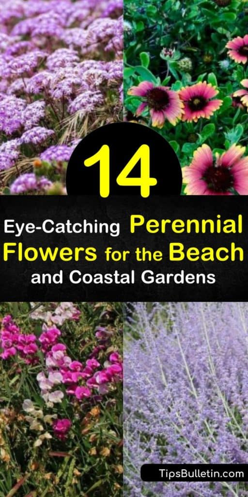 Learn how to plant coastal gardens that are salt and seaside tolerant. Attract hummingbirds to the yard with bee balm and fill the garden with ornamental grasses, yarrow, salvia, aster, and gaillardia. #beachgarden #growingbeachflowers #perennialsforbeach