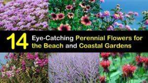 Perennial Flowers for the Beach titleimg1