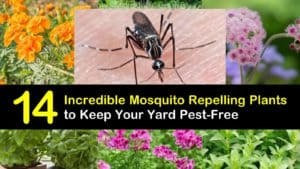 Amazing Mosquito Repelling Plants titleimg1