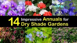 Annuals for Dry Shade titleimg1